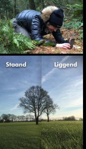 Mobiele fotografie met verschillende standen
